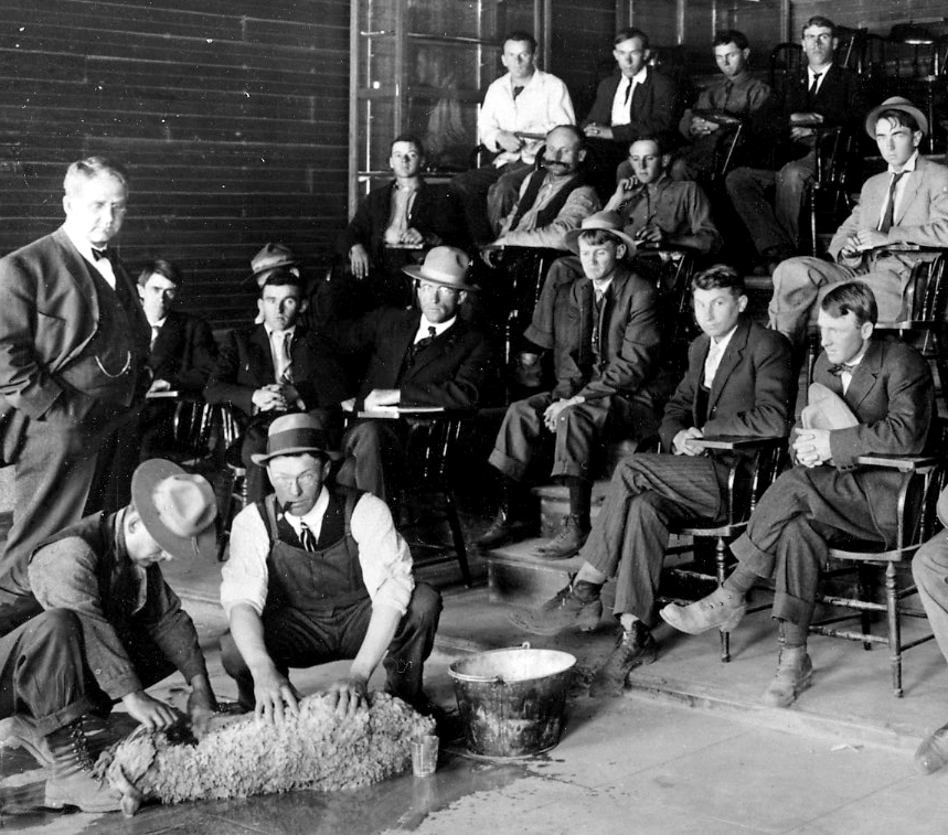 Man examining a sheep as others in the auditorium watch
